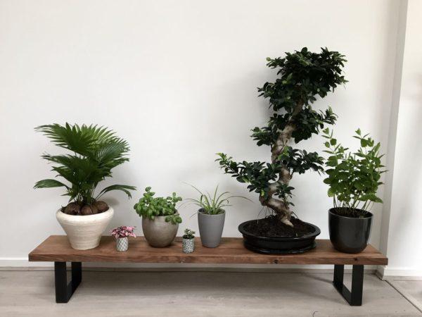 Banc présentoir plantes pieds DESIGN ACIER